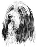 12 Bearded Collie Notelets with Envelopes